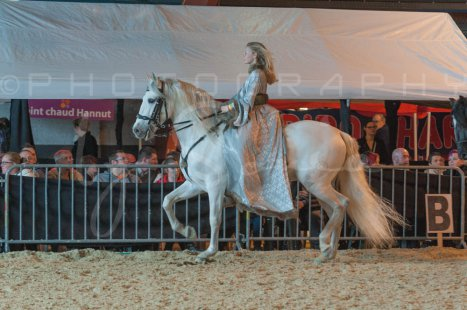 salon-du-cheval--hannut-972_26226749756_o