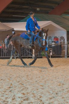 salon-du-cheval--hannut-986_26160237262_o