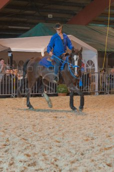 salon-du-cheval--hannut-987_26252564465_o