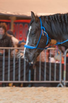 salon-du-cheval--hannut-990_26252671795_o