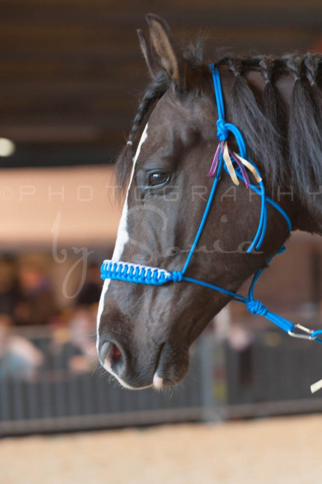 salon-du-cheval--hannut-992_25979819240_o