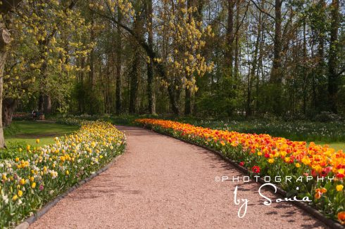 floralia-brussels-32_26172527763_o