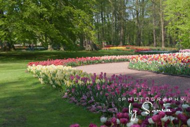 floralia-brussels-35_26172526943_o