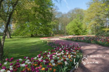 floralia-brussels-36_26172526533_o