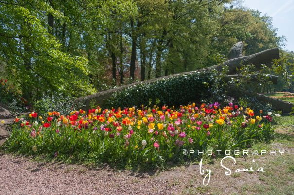 floralia-brussels-40_26172525503_o