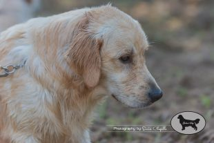 goldens-day-127