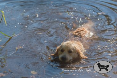 goldens-day-176