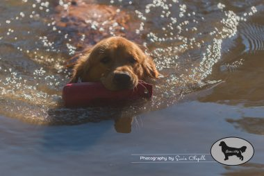 goldens-day-209