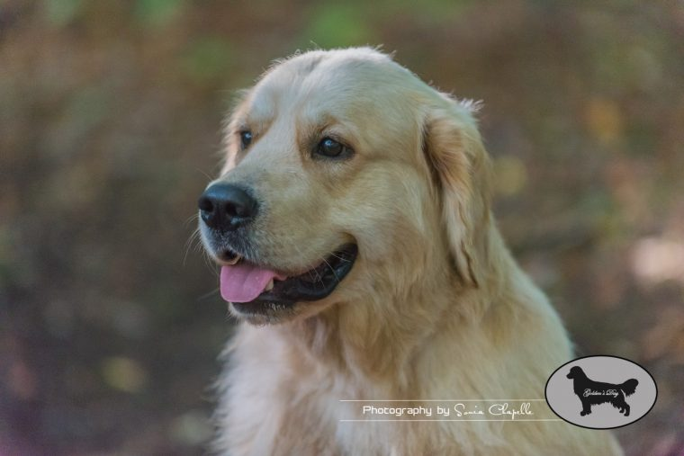 goldens-day-64