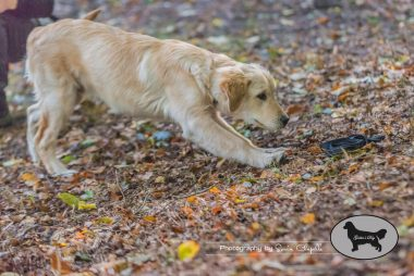 goldens-day-88