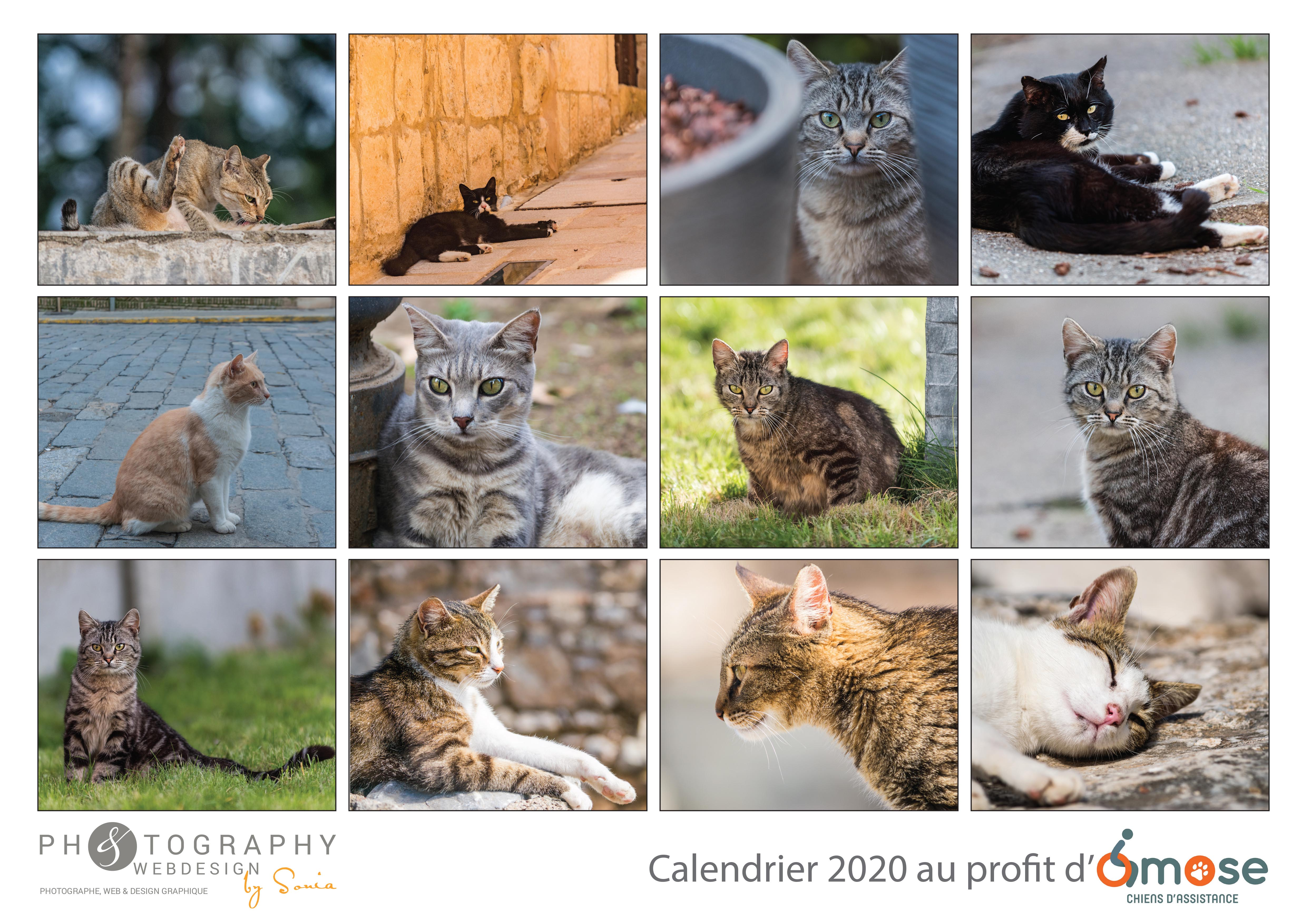 Calendrier Chat 2020.Calendrier 2020 Chats Format A3